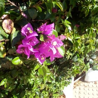 flowers-1007_155000
