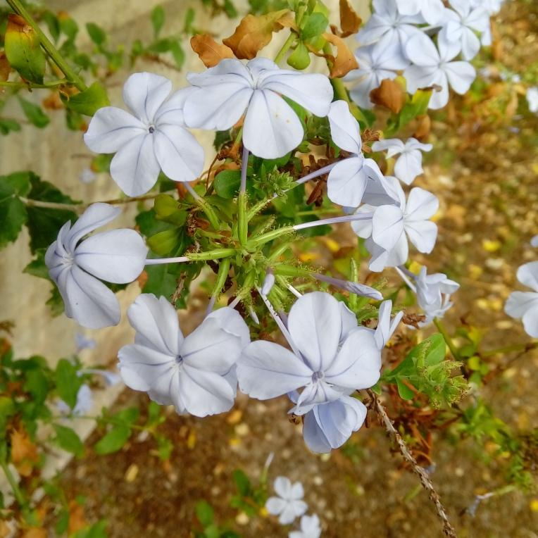 flowers-1014_111221