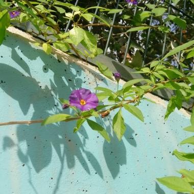 flowers-1014_111356