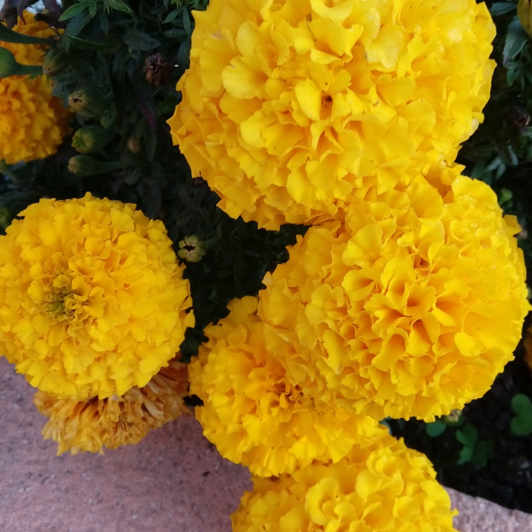 flowers-in-alicante-081133