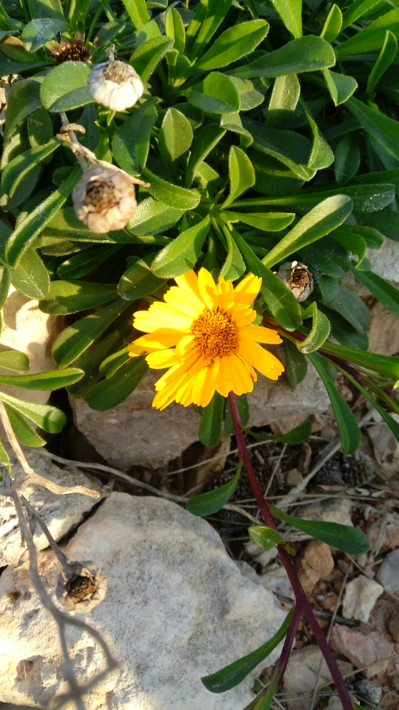 flowers-in-alicante-091653