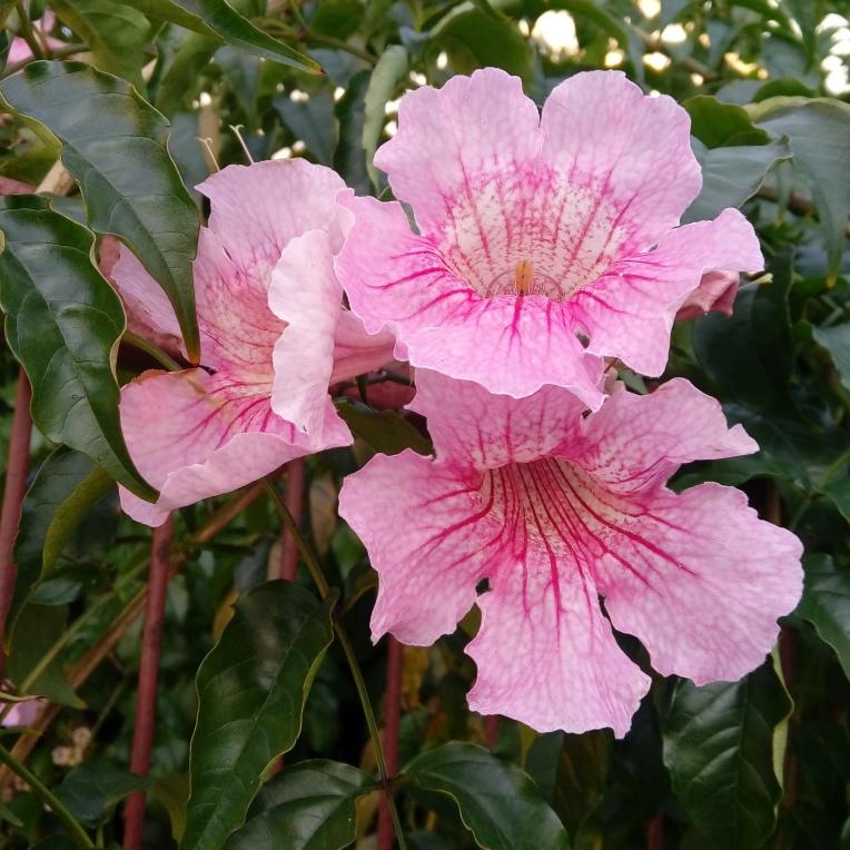 flowers-in-alicante-092039