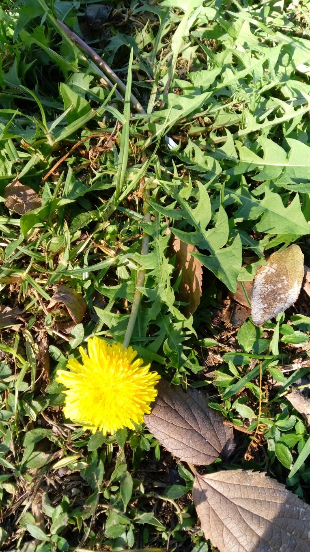 flowers-in-alicante-131008