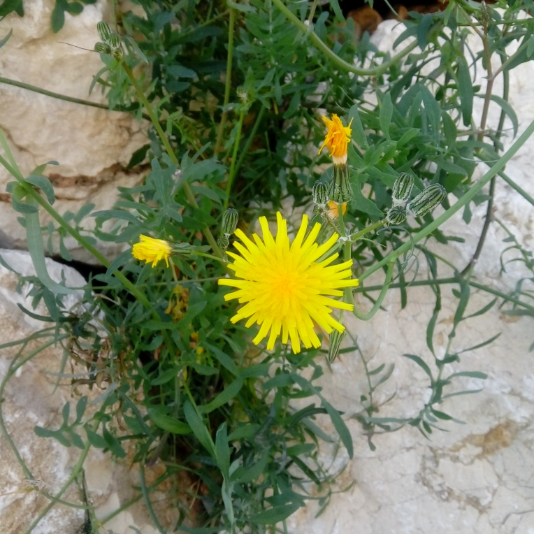 flowers-in-alicante-131448