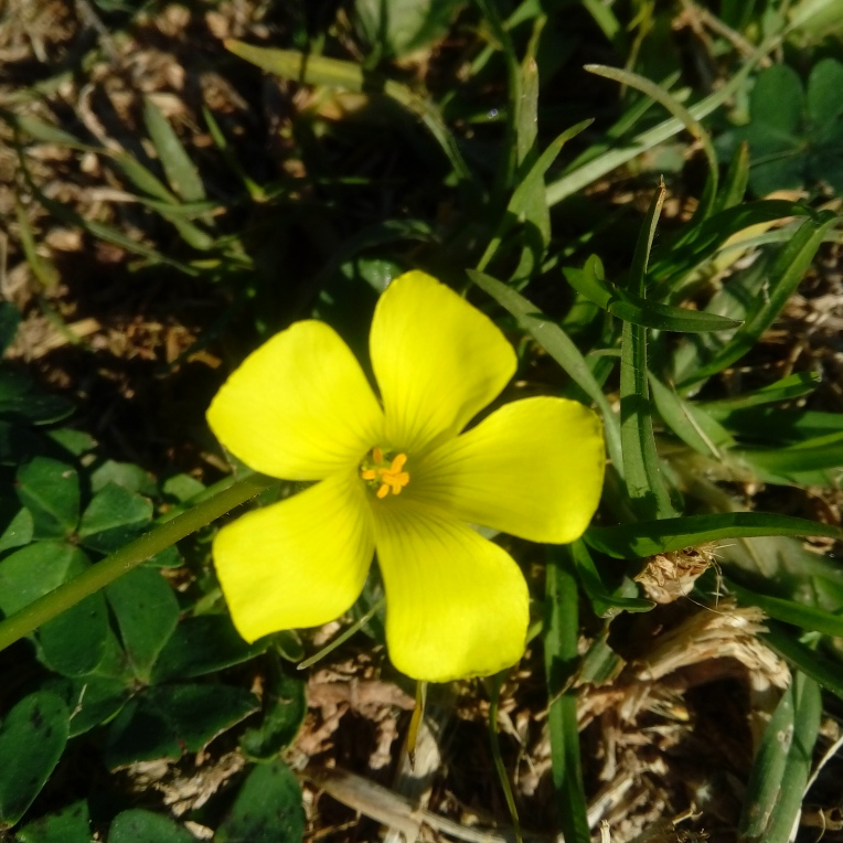 flowers-in-alicante-131656