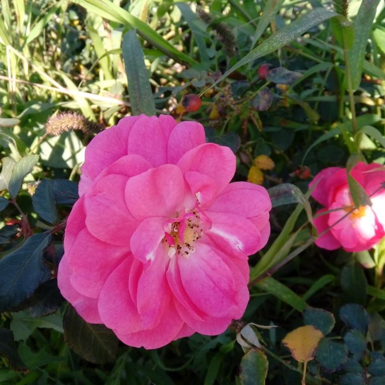 flowers-in-alicante-131929