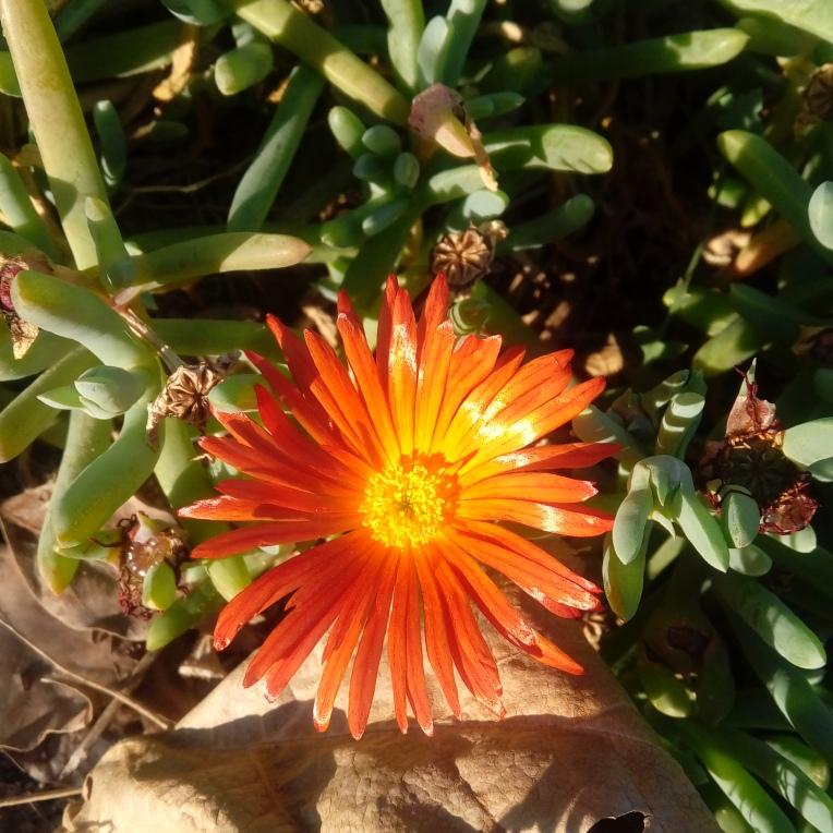 flowers-in-alicante-153313