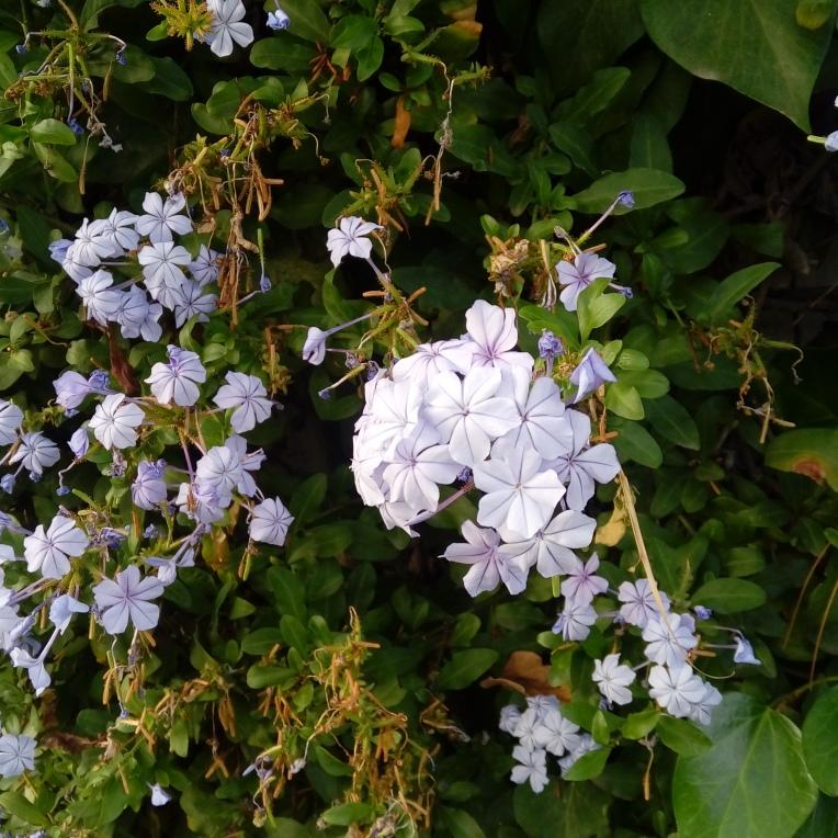 flowers-in-alicante-160835