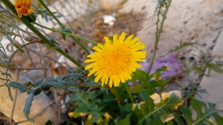 flowers-in-alicante-161040