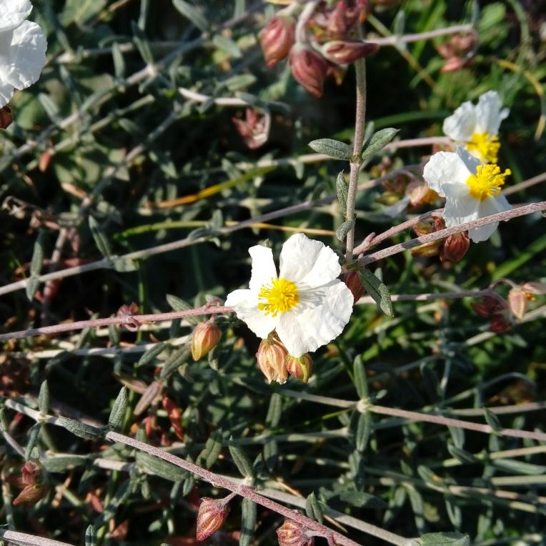 flowers-in-alicante-132342