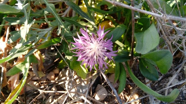 flowers-in-alicante-133316