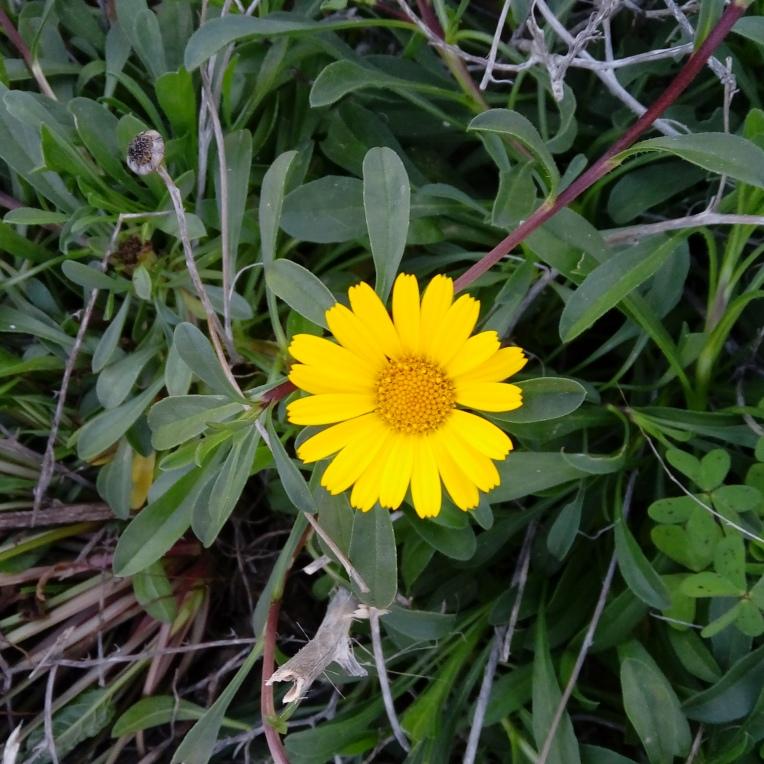 flowers-in-alicante-164724