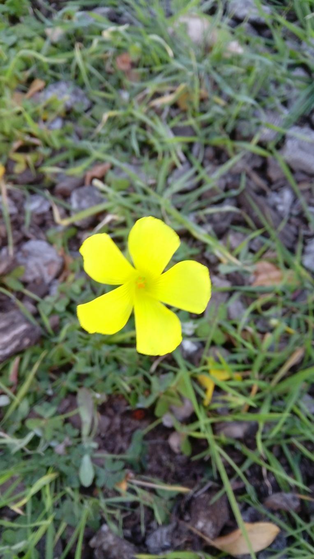 flowers-in-elche-143555