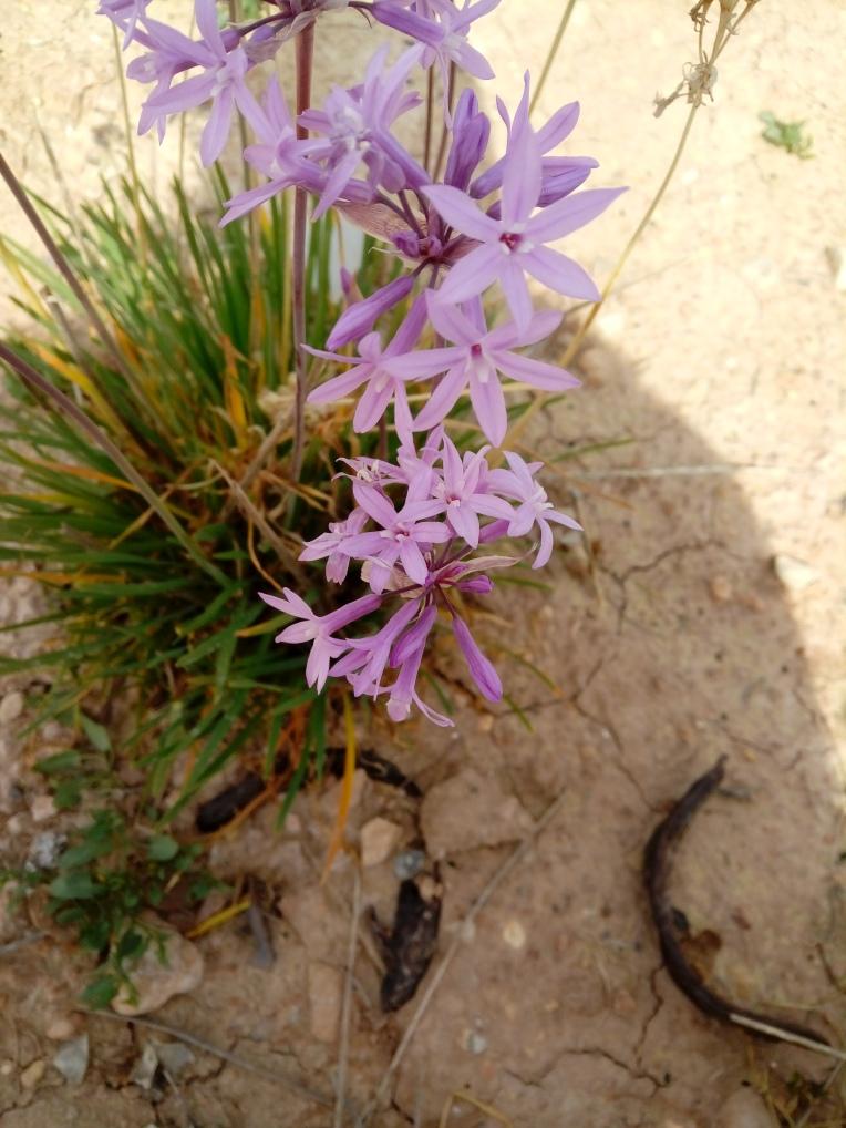 flowers-in-alicante-20190324_114200